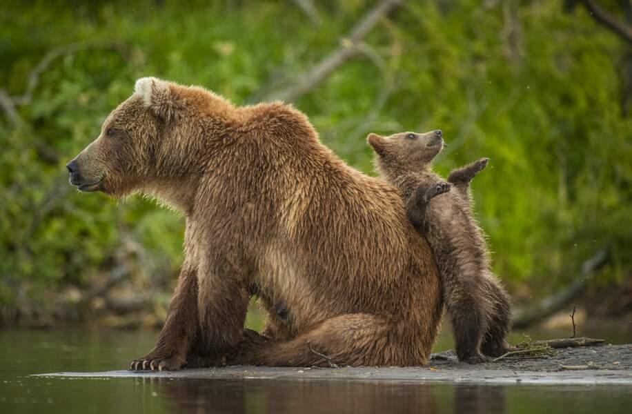 Au Kamtchatka, rien de tel qu'une maman ourse pour faire une pause