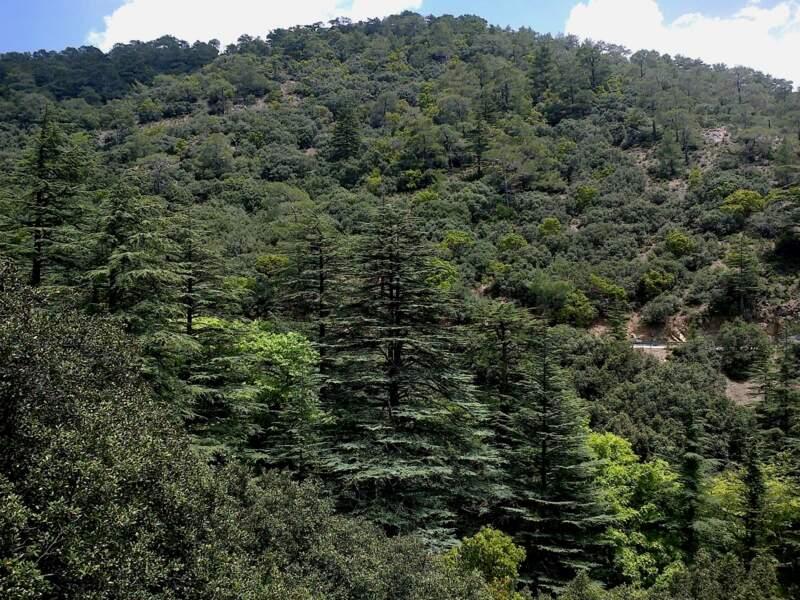 La vallée des Cèdres