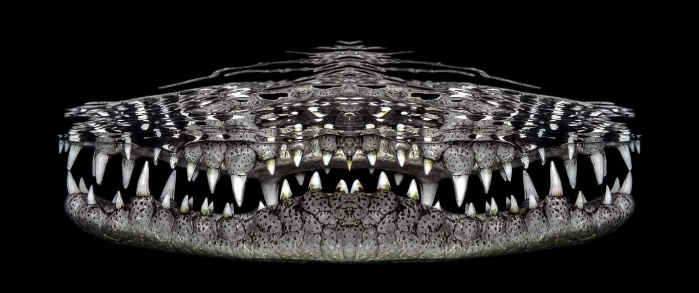Crocosmile