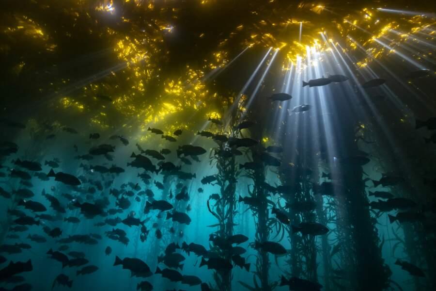 Cathédrale d'algues