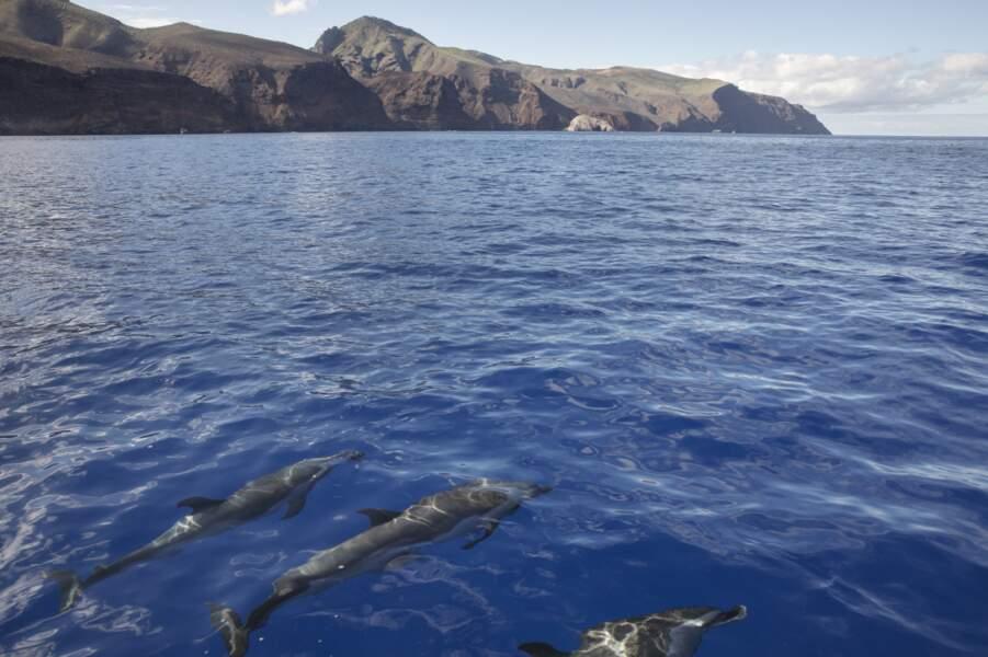 Les Galápagos de l'Atlantique Sud