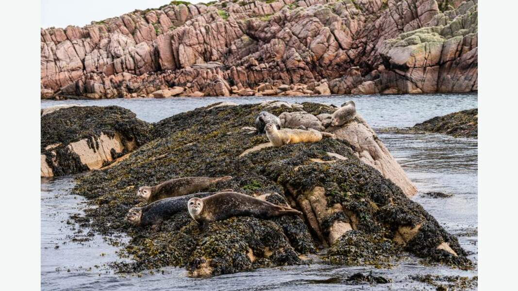Colonie de phoques