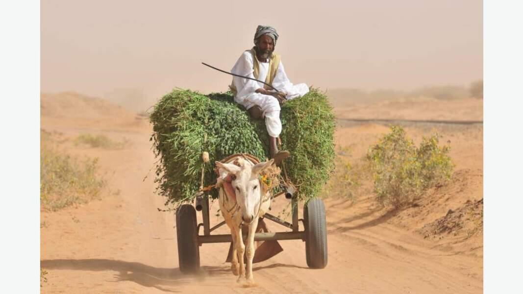 Paysan transportant des feuillages