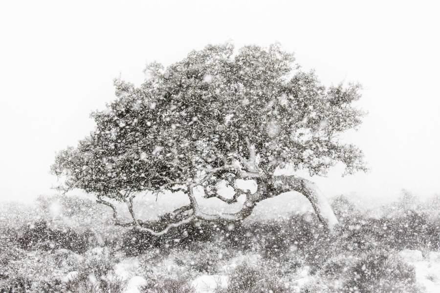 En plein blizzard