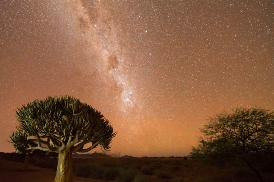 Le désert du Namib, en Namibie
