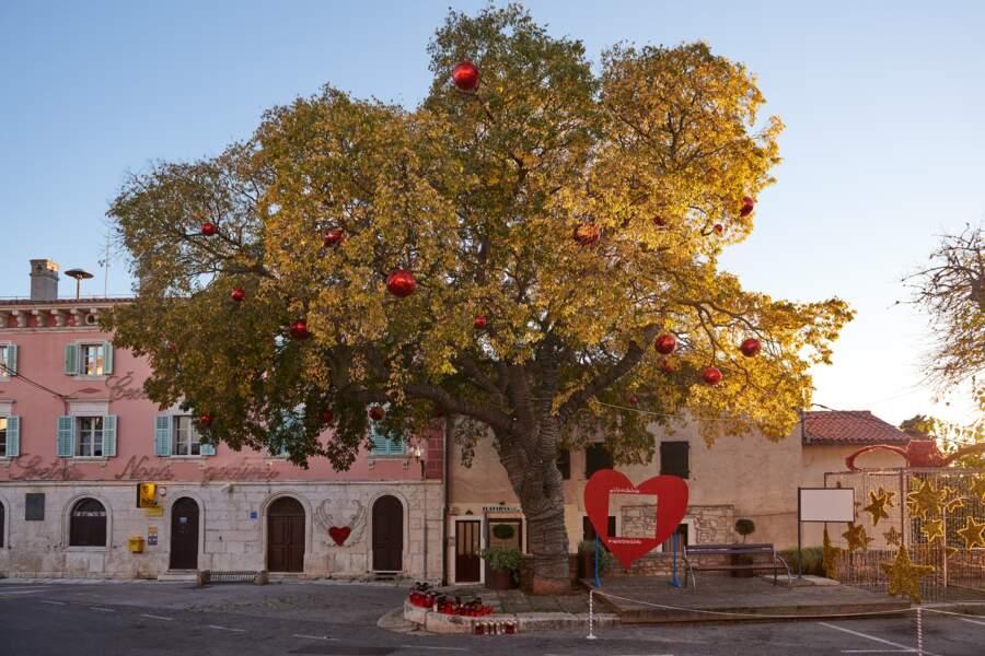 Croatie : l'arbre aux chocolats