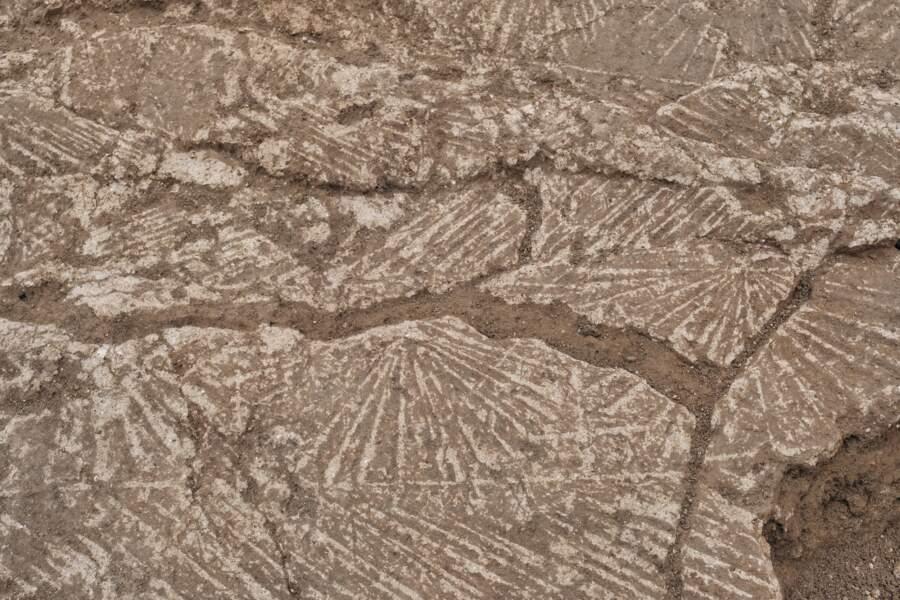 Elévations de murs en terre incisées en chevrons