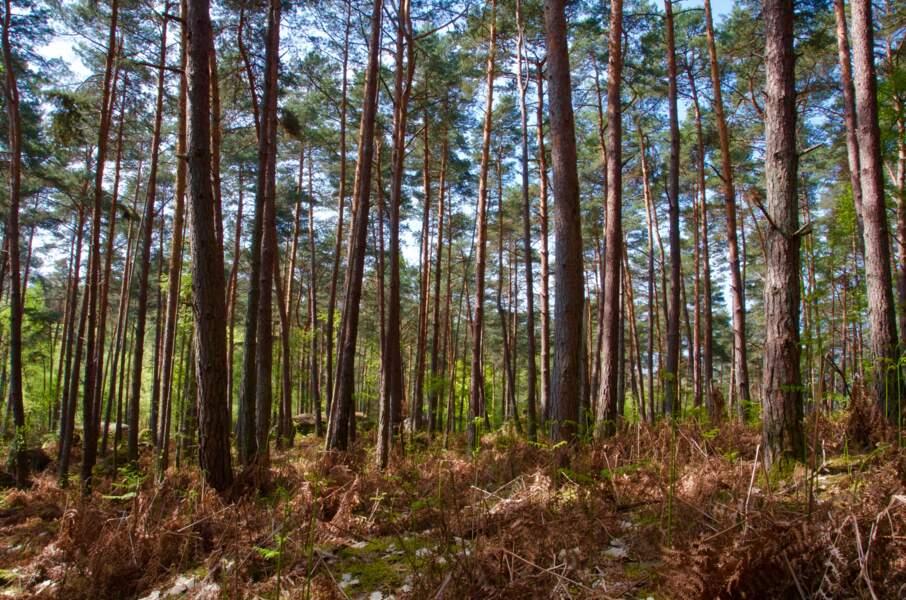 Arbonne-la-Forêt en Seine-et-Marne