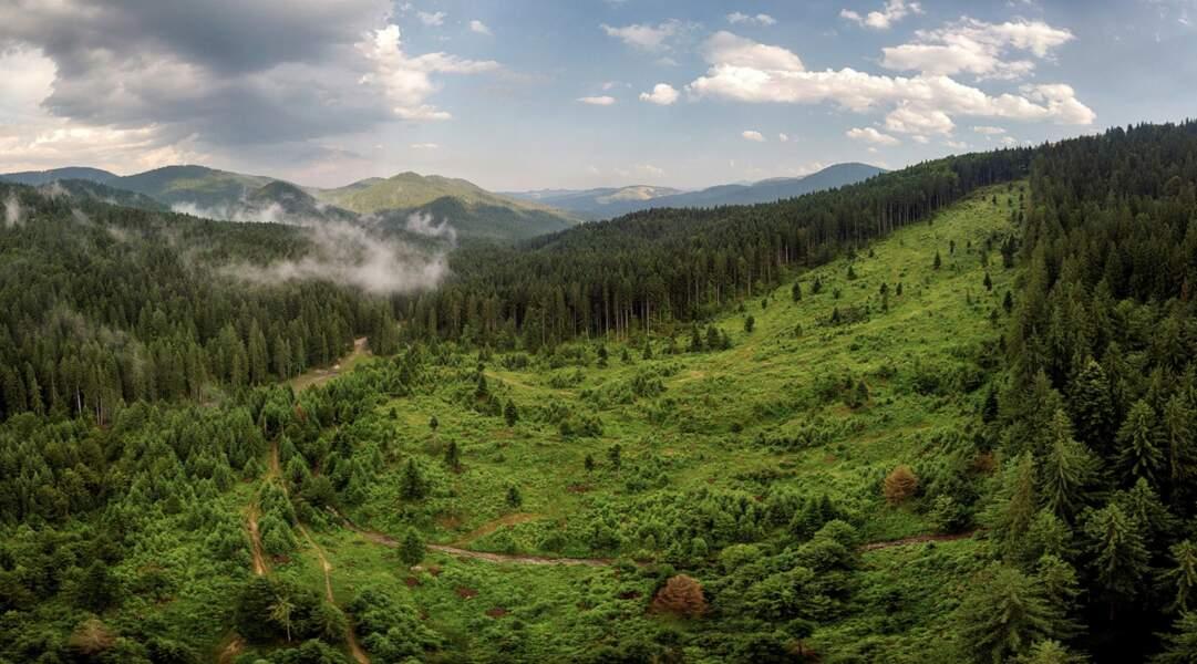 La déforestation illégale sévit