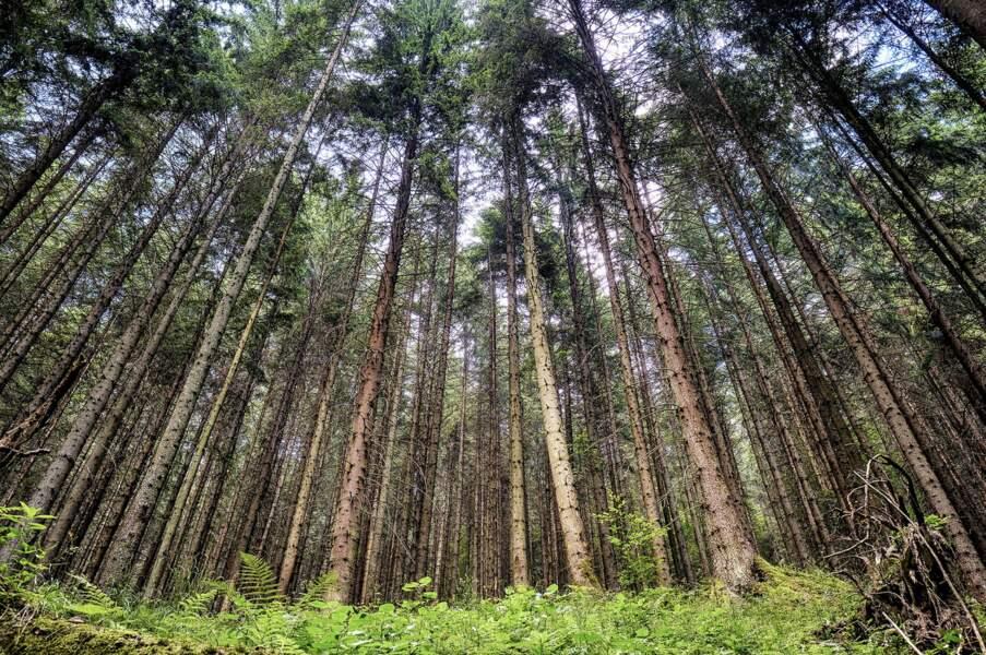 Des forêts inviolées