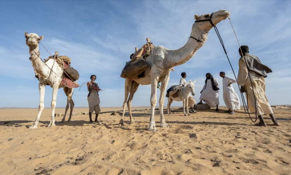 Tribus nomades
