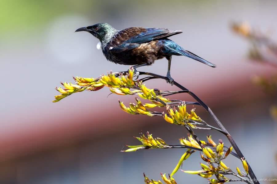 Un oiseau bavard