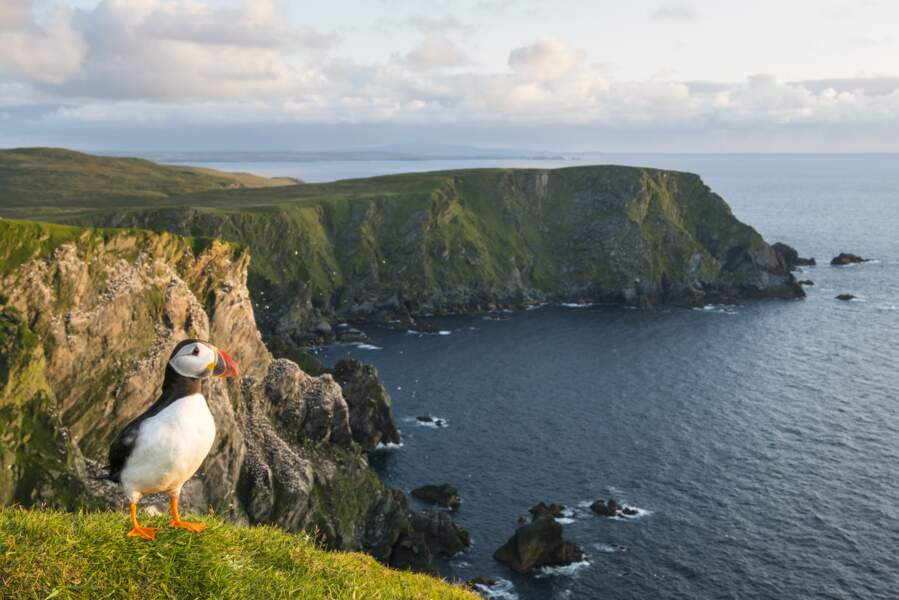 Shetland, «un immense petit monde»