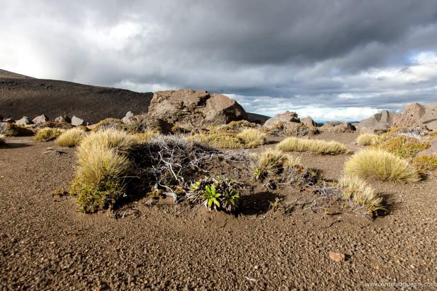 Le Tongariro, sanctuaire des volcans de Nouvelle-Zélande