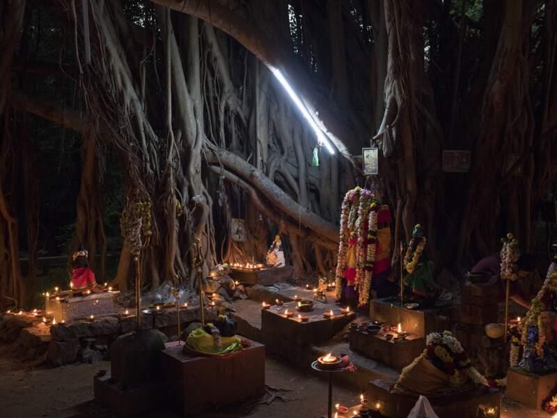 Des bougies et des offrandes au pied du banian sacré