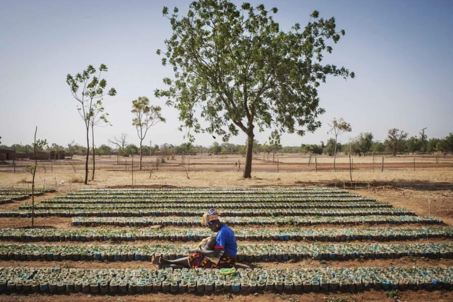 L'agroécologie pour reverdir le Sahel