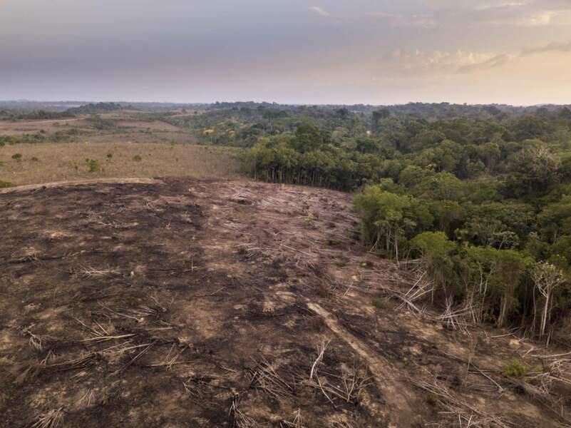 Vue aérienne de la déforestation dans la forêt amazonienne pour ouvrir des terres à l'agriculture