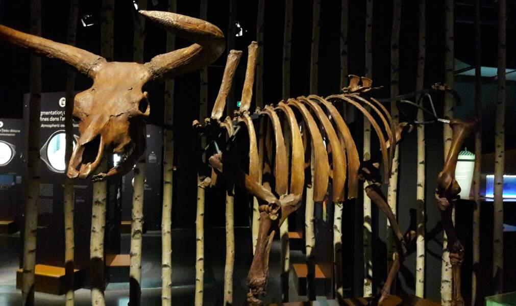 Corne d'aurochs