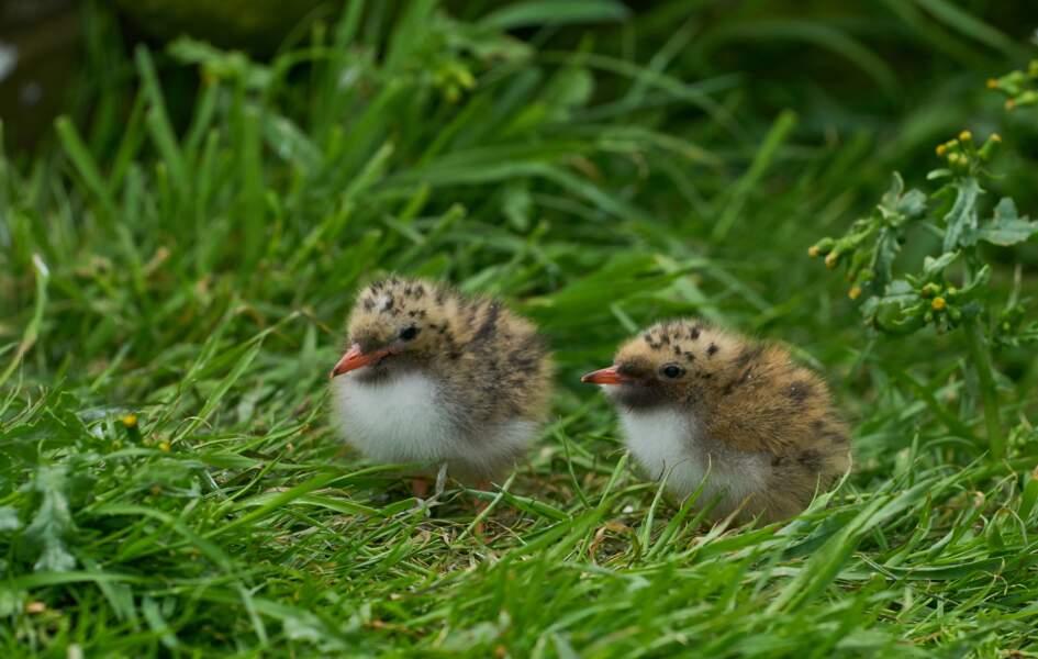 Deux îles bretonnes interdites au public cet été pour protéger les oiseaux