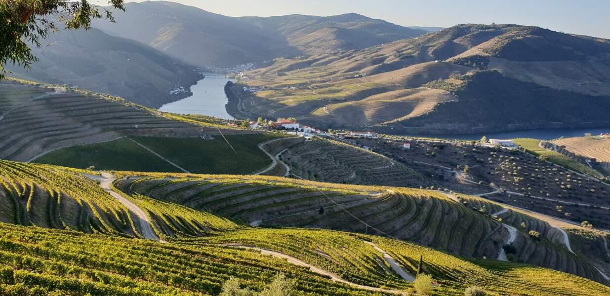 Terre des vignobles