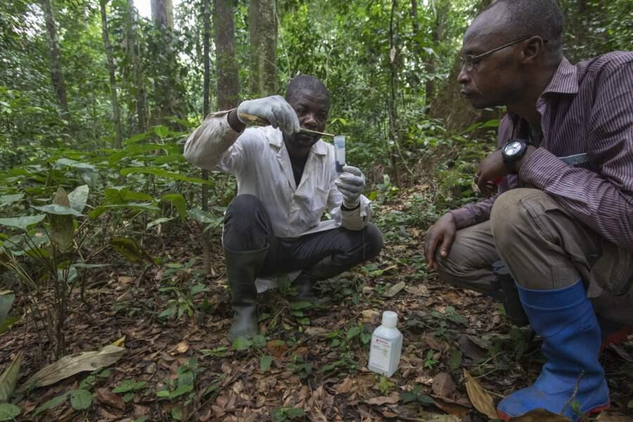 La forêt tropicale, une mine d'agents pathogènes