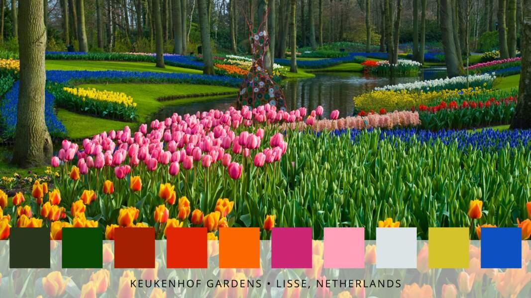 5- Le parc floral de Keukenhof à Lisse en Hollande