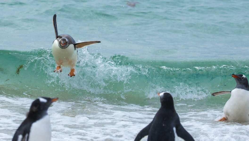 I believe I can flyyyyy
