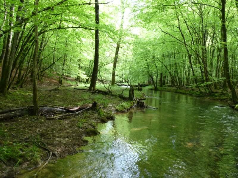 La forêt de Chaux (Jura/Doubs)