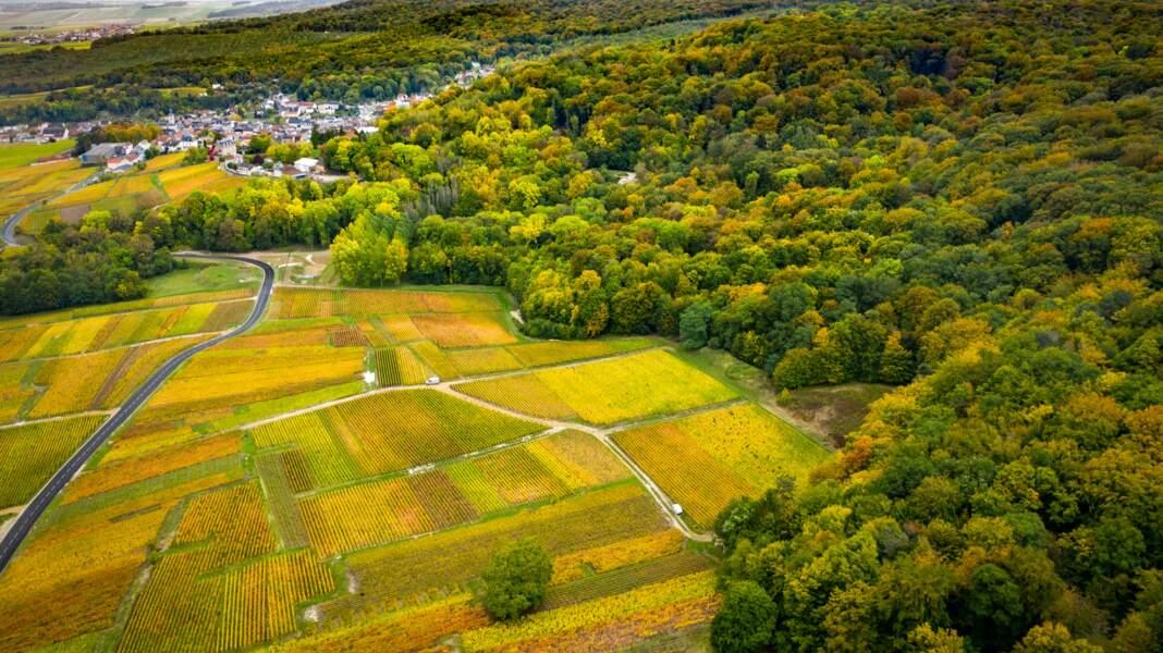 Les forêts de la Montagne de Reims (Marne)