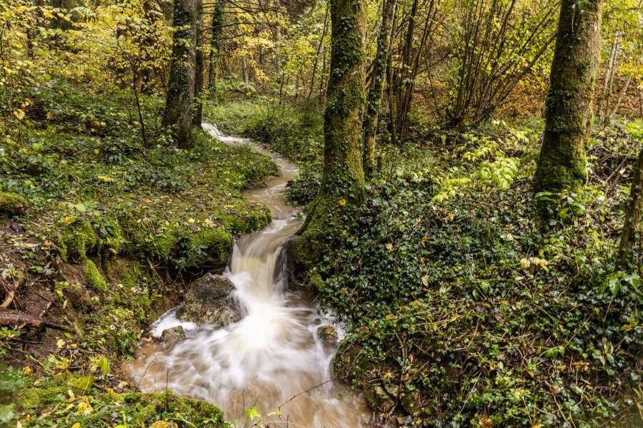 La forêt du Semnoz (Haute-Savoie)