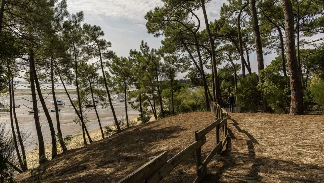 Les forêts du bassin d'Arcachon (Gironde)