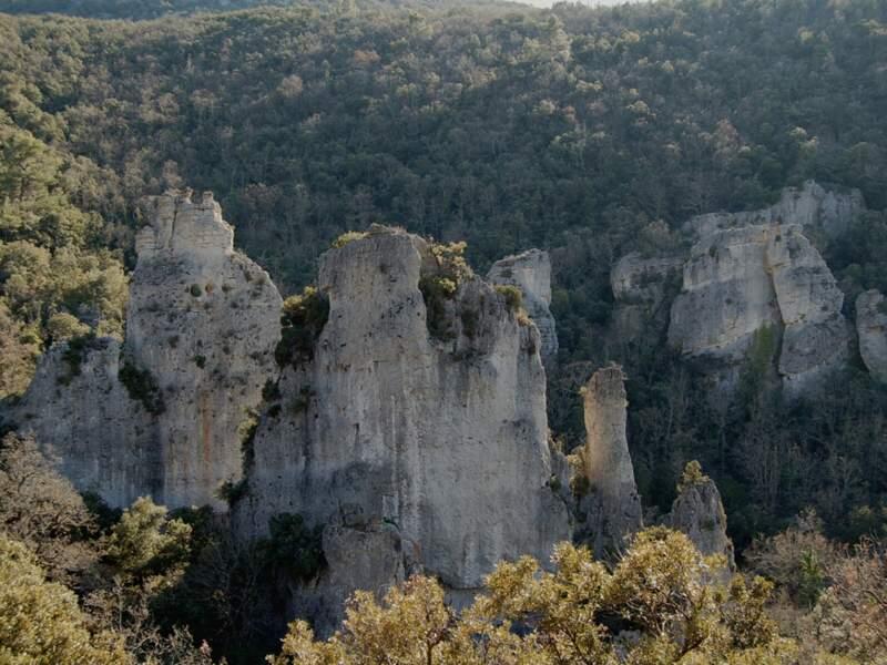 La forêt de Morieres-Montrieux (Var)
