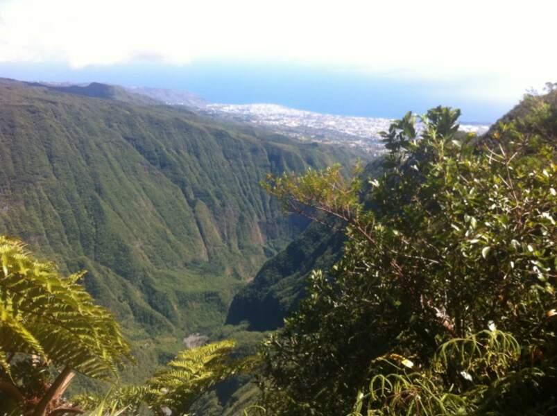 La forêt de la Plaine des fougères (La Réunion)