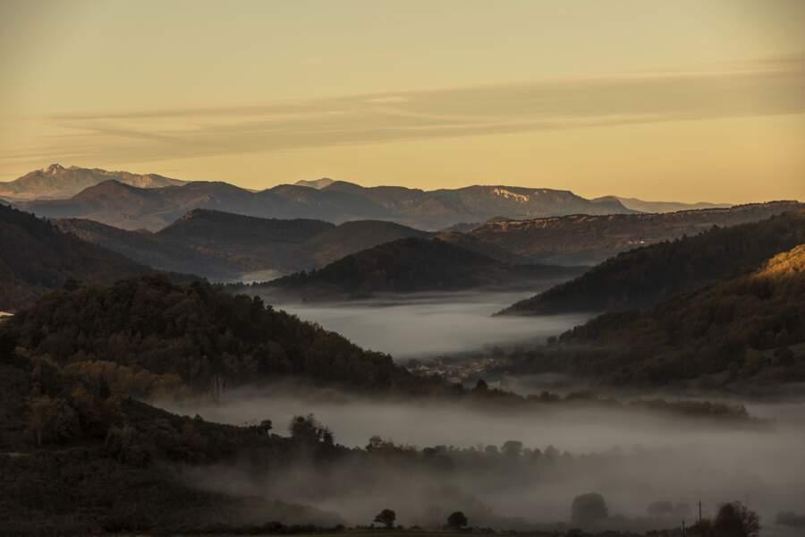 La forêt du Rialsesse (Aude)