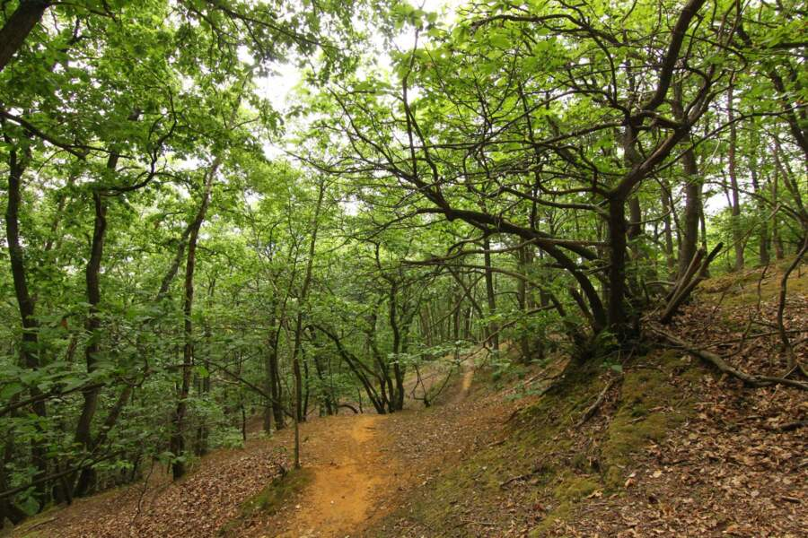 La forêt de Verrières (Essonne/Hauts-de-Seine)