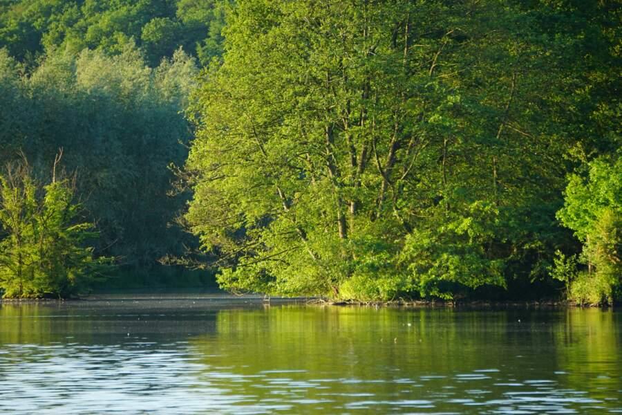 La forêt de l'Abbé-Val-Joly (Nord)
