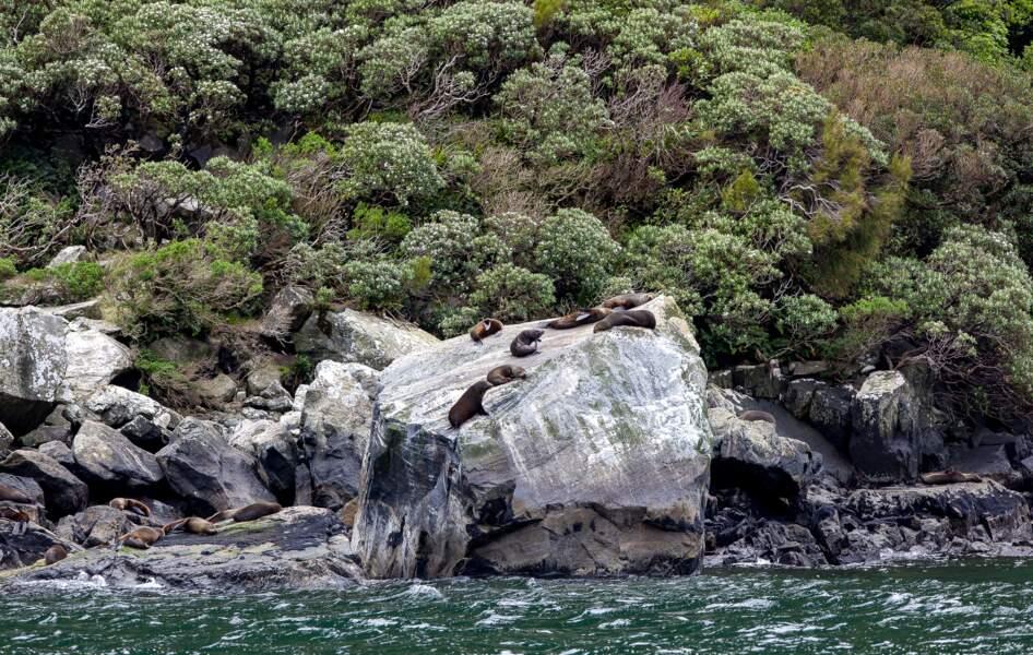 Pause sur les rochers