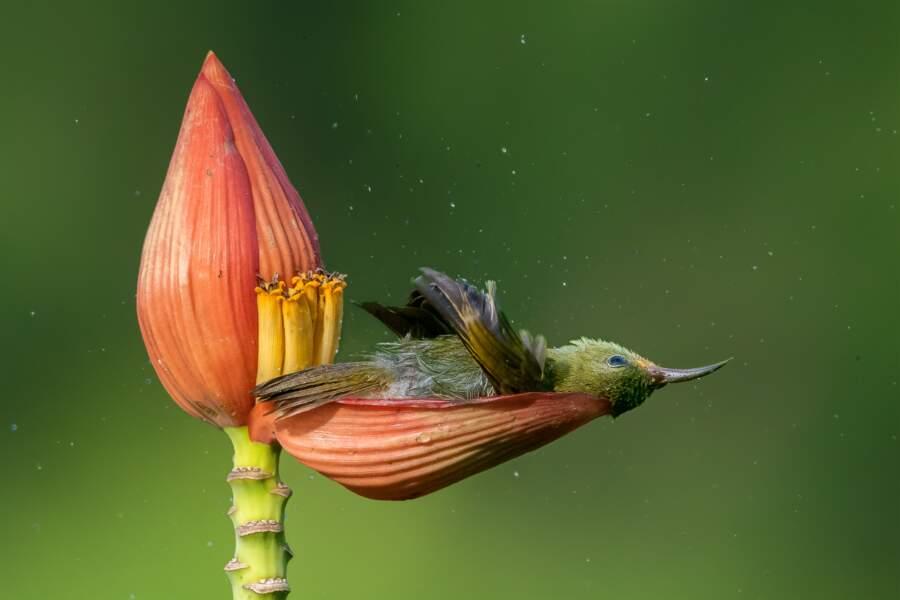 Baignoire florale