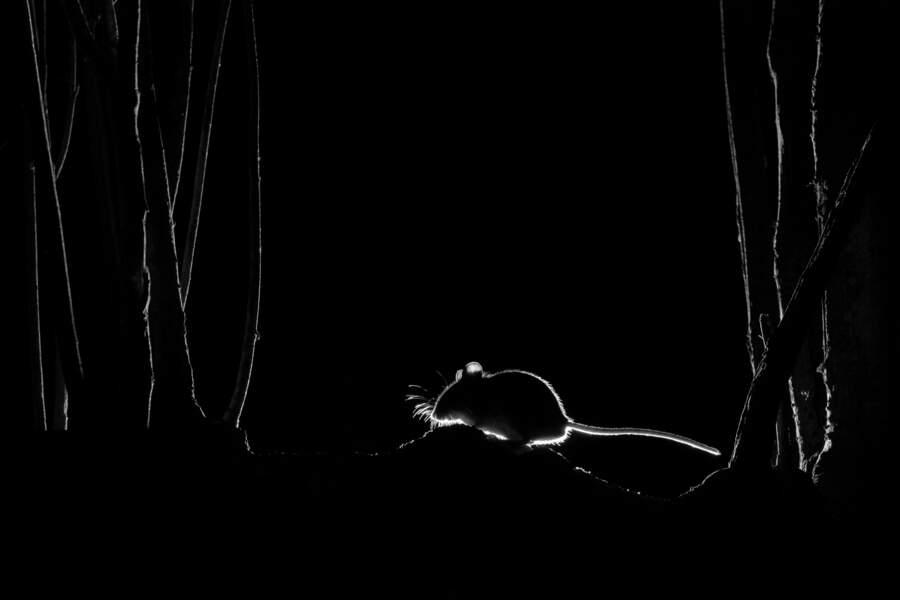 En silhouette