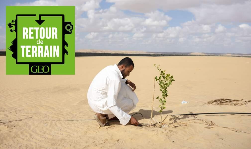 # 18 Egypte : l'oasis de Siwa, un paradis vert au milieu du Sahara
