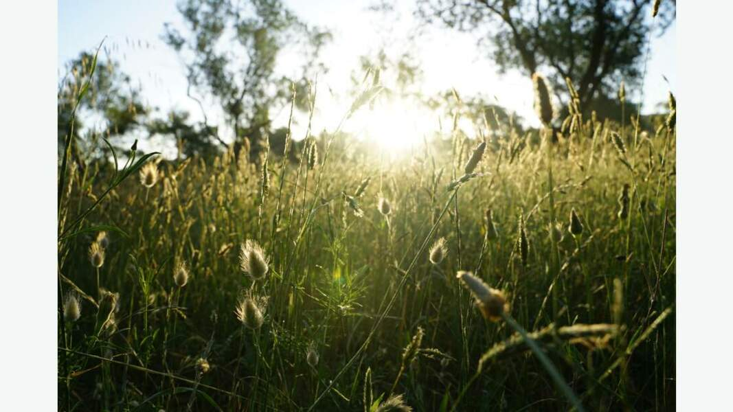 Lever de soleil printanier