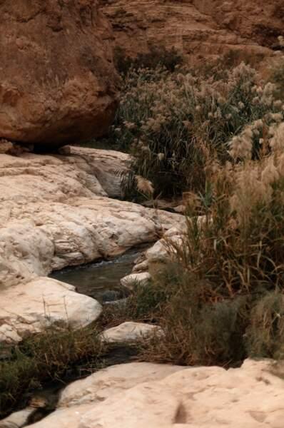 Dans la clarté des pierres, Ilanit Illouz
