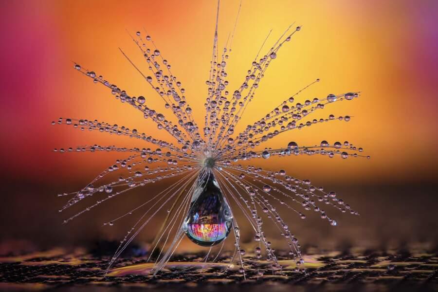 Le parapluie pissenlit de Petra Jung