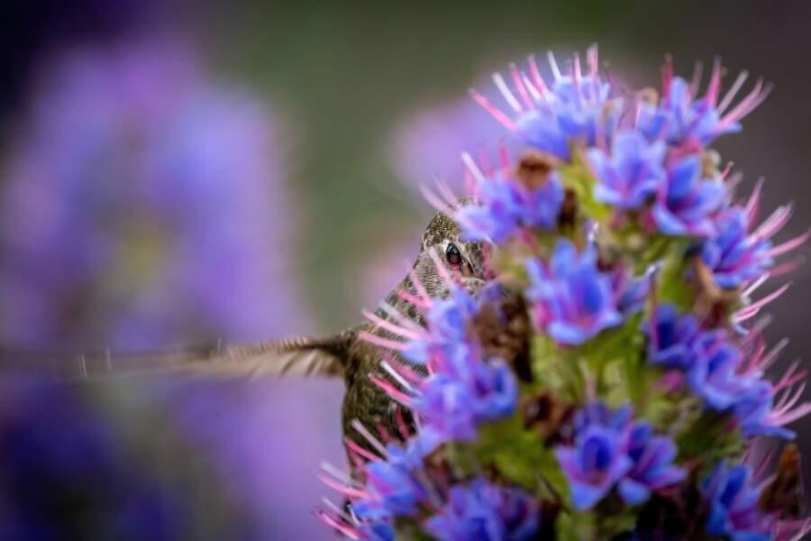 L'oeil du colibri