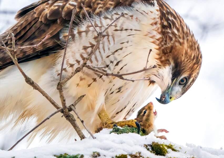 Le prédateur et la proie