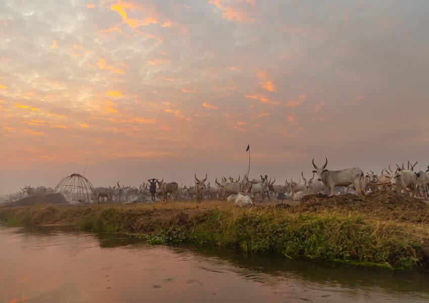 Le Nil Blanc, fleuve nourricier