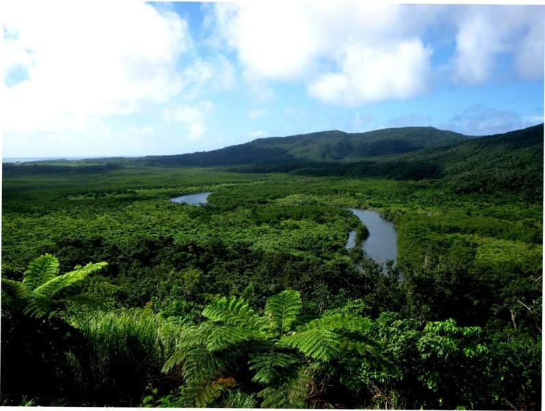 Les îles Amami-Oshima, Tokunoshima, l'île d'Iriomote et la partie nord de l'île d'Okinawa (Japon)