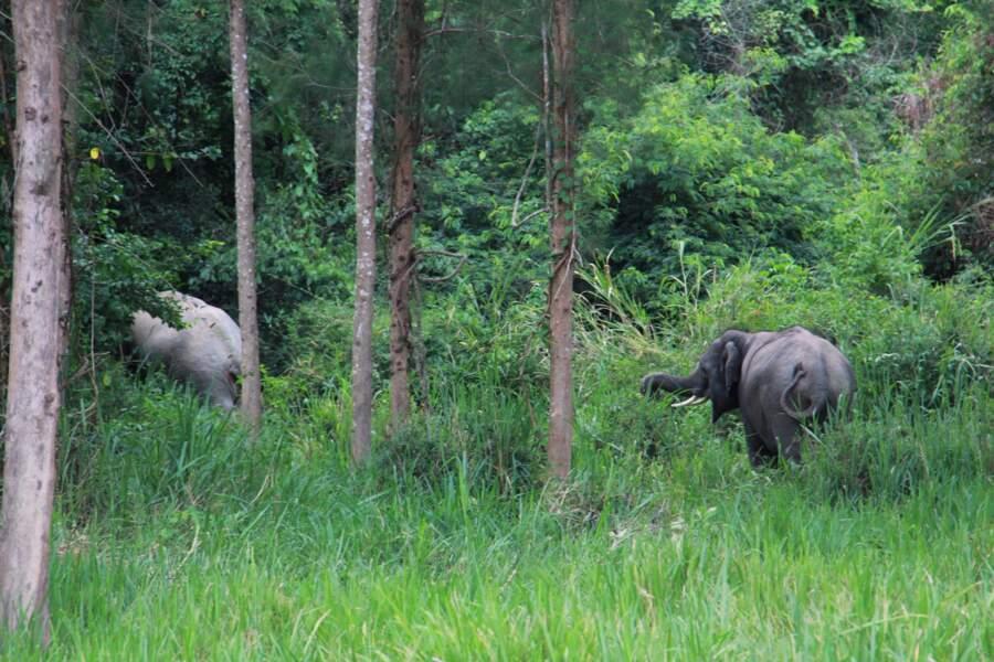 Le complexe des forêts de Kaeng Krachan (Thaïlande)