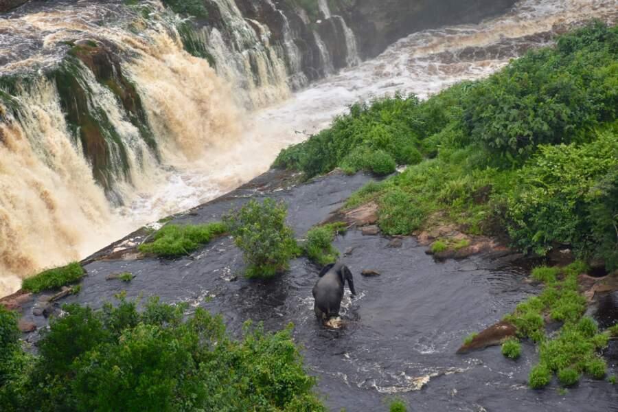 Le parc national d'Ivindo (Gabon)
