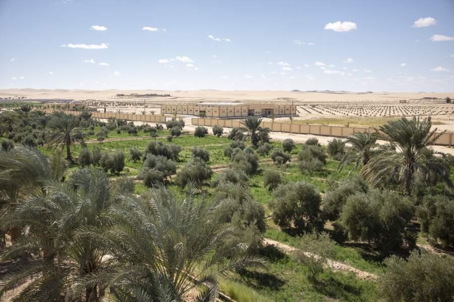 Palm Waha Siwa est la plus grande entreprise agricole de l'oasis